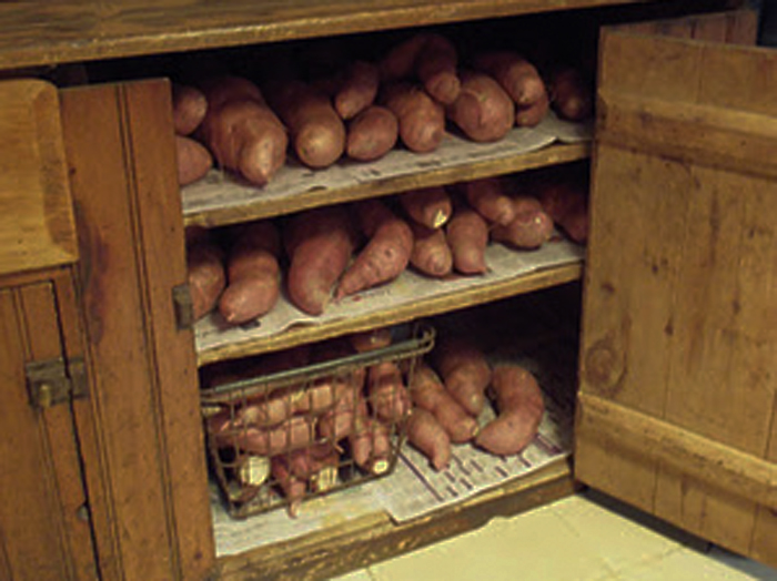 sweet potatoes in storage1