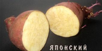 yaponsky